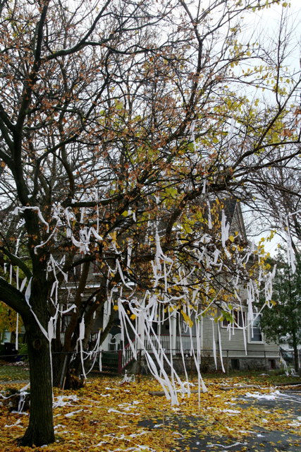 Tree Covered In Toilet Paper Tp Img 7627 Www Wikihow Com