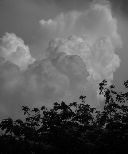 Clouds over Rutgers Gardens (6/1/11) | by Dendroica cerulea