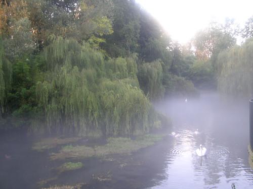 Lacul lebedelor pentru Cella