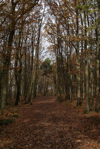 Forêt Communale du Bois des carrés – Les Ulis | by CpaKmoi