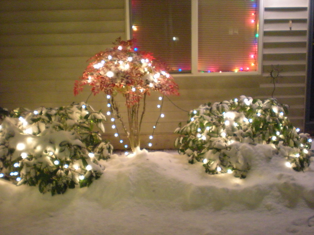 Christmas Lights On Our Front Bushes Pretty With Snow Flickr
