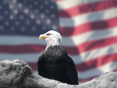 Eagle and American Flag by Bubbels | by stephen.moore