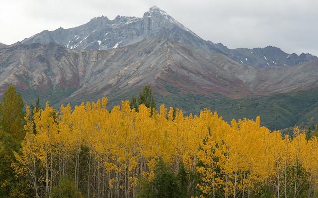 Fall foliage along the Glenn Highway NE of Anchorage, AK