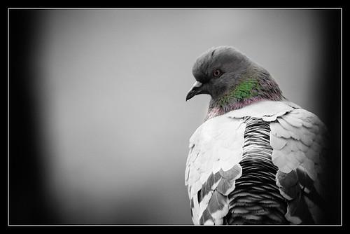 Dove | by Ankhbayar Tumurbaatar