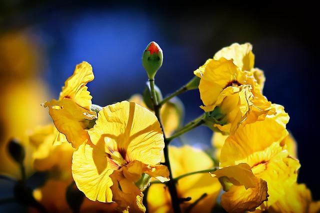 A FLOWERING TREE -  (Floración de un árbol)