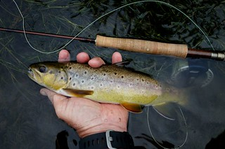 Brown trout on a prince below a hopper. | by thart2009