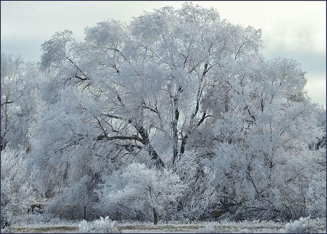 Frosty morning in Utah.