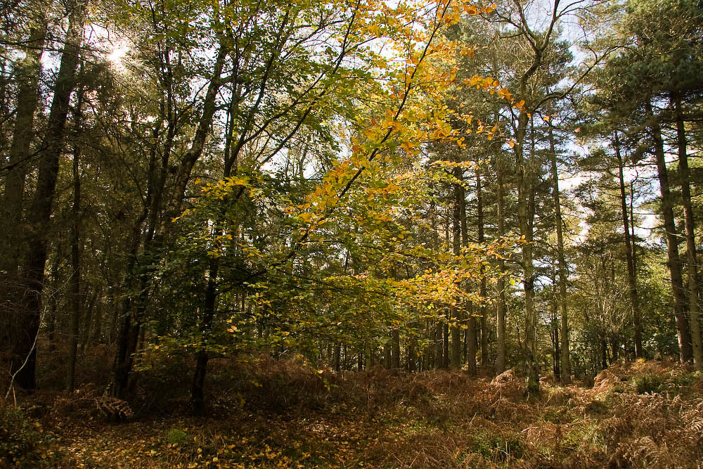 Woodlands near Leith Hill