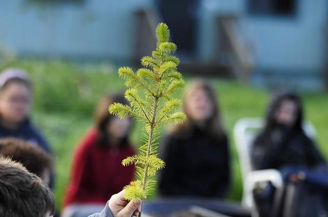 Tree specimen