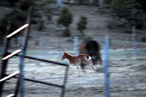 camping horse motion blur am cabin colorado gimp mesaverde linux cortez colt southwesternunitedstates digikam mancos theamericansouthwest opensourcesoftware fangars