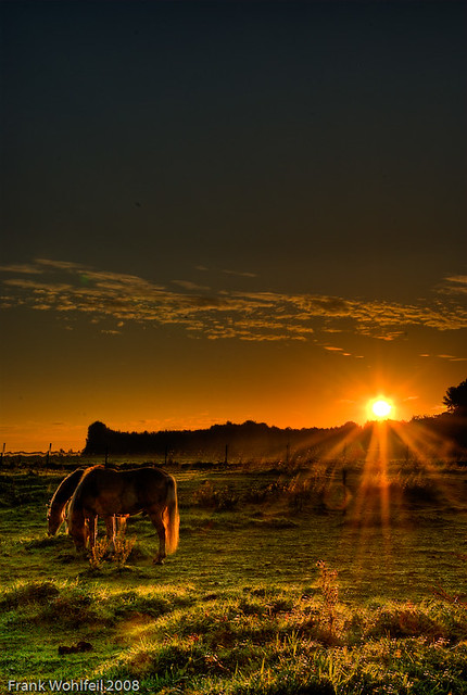 Pferde beim Sonnenaufgang