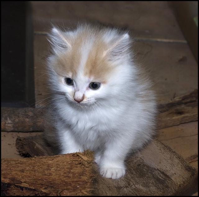 sevimli bir kedi