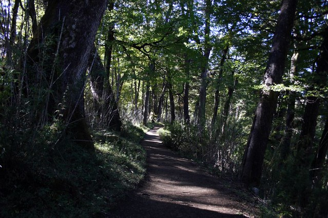 Bosque Patagonico - PN Lanin