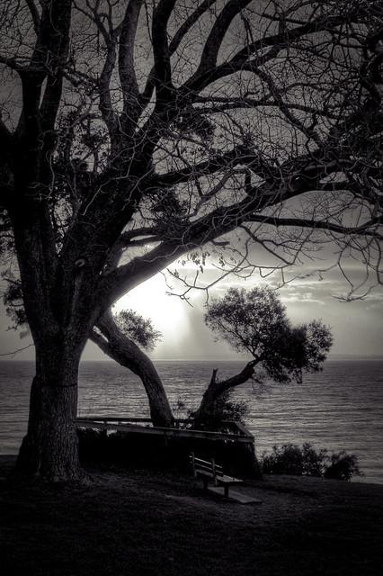 Phillip Island View
