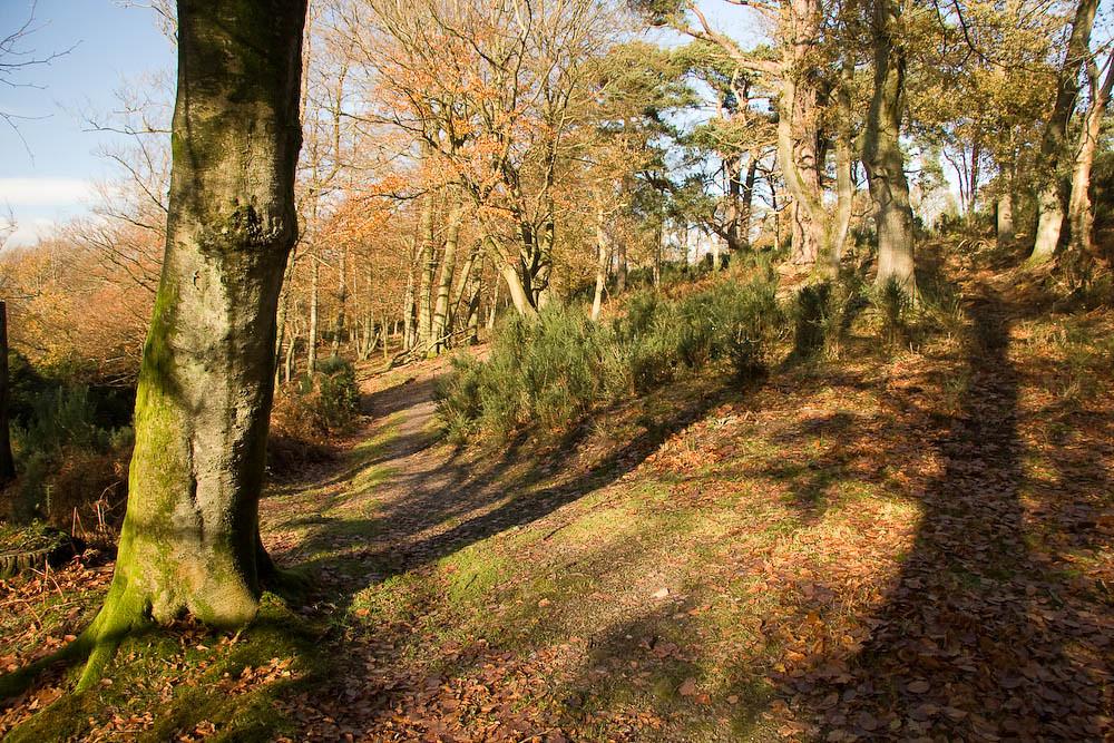 Ridden Corner Following the Sussex Border Path