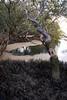 NRM - 2g st kilda mangroves ca