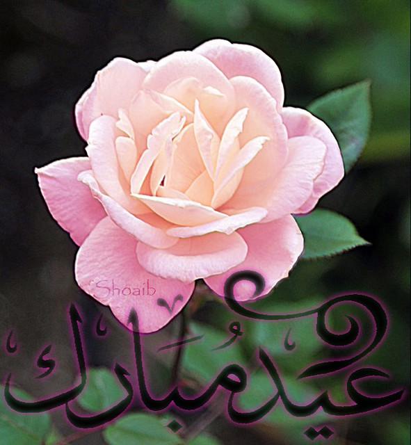 Eid Mubarak On Colored Flower Muhammad Shoaib Qureshi Flickr