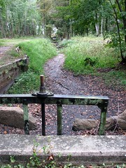 B Tree Canal Pettigrew SP 8246