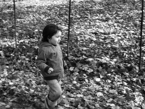 Prospect Park Nov. 9 | by theDVL