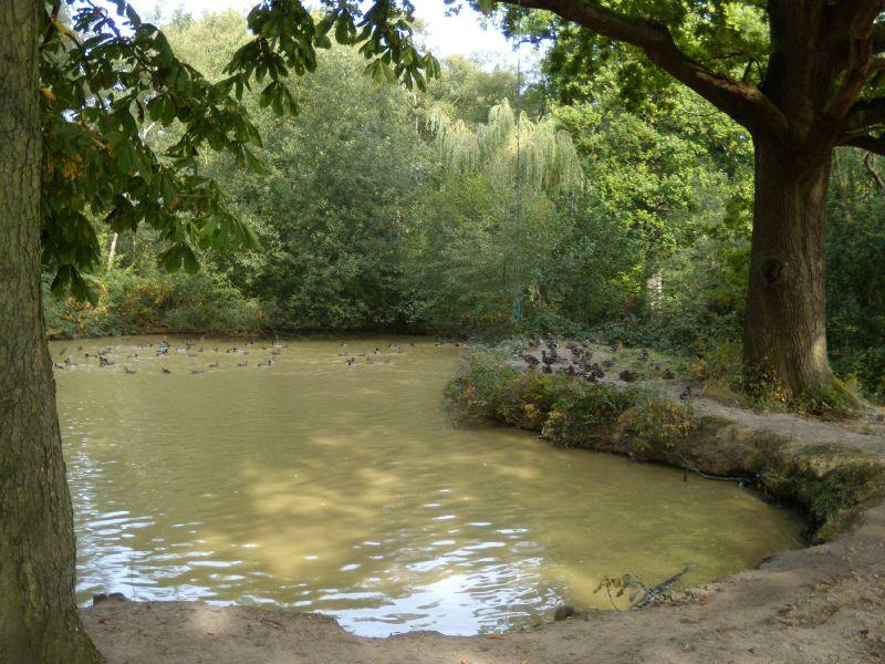 Duckpond Balcombe Circular via Ardingley Reservoir (summer walk)