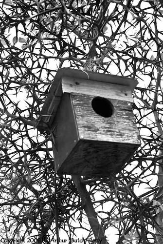 usa georgia savannah 840 butch petty arthurbutchpetty butchpettyphotographycom butchsphotoblog photography photos photoblog nikon nikond80 d80 scenery nature landscape savannahga 2008 blackandwhite birdhouse thorns