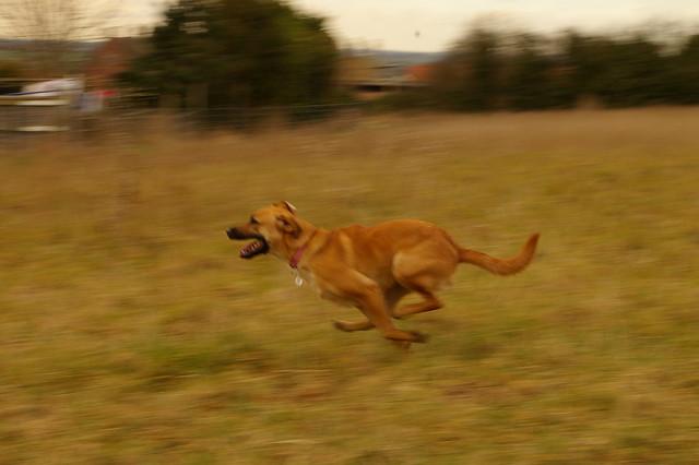 imgp0971 - Millie Running