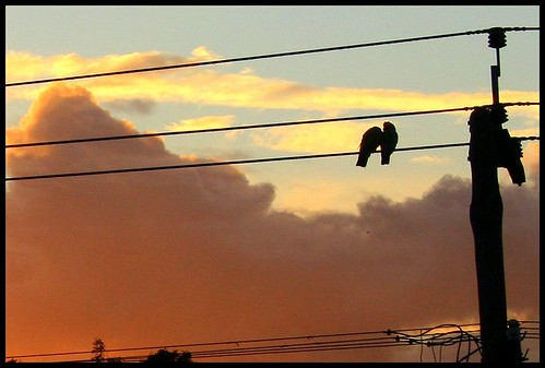birds sunrise wire suburbia australia pole perth powerline