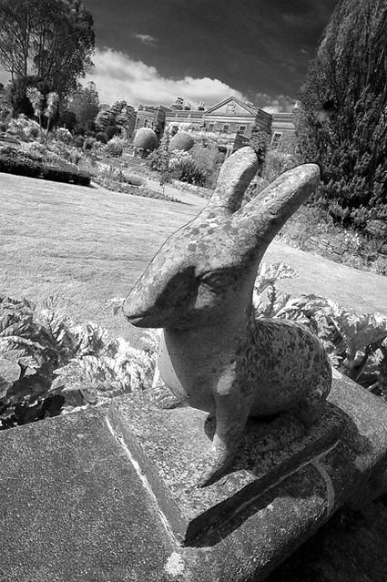 The Rabbit at Mount Stewart