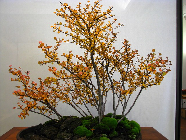 Bonsai Show, Toronto Botanical Garden, Toronto, ON