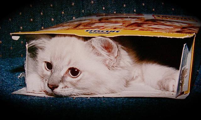 Cracker Cat