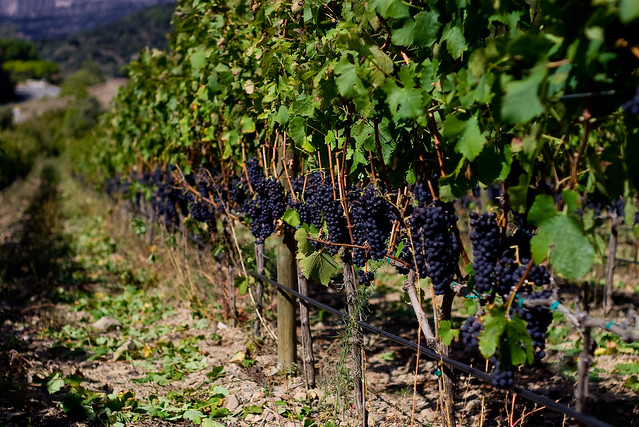 Priorat wine, one of the best in the world!