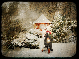 christmas lights | by Cornelia Kopp