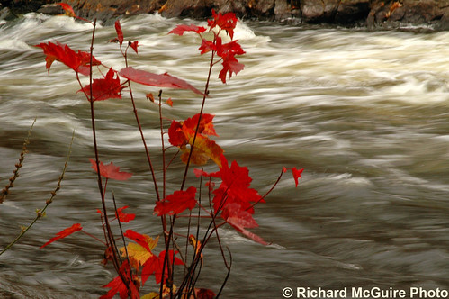 Raging river, fall leaves, near Blakeney, ON | by Richard McGuire