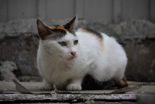 CAT_2008_0007   by ~ Andrew ~