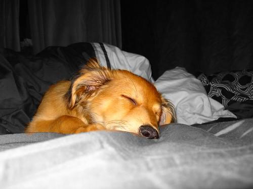 Sleeping beauty | by TheBaubShow