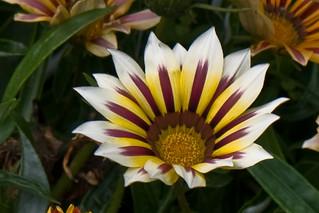 Flower   by bencrowe