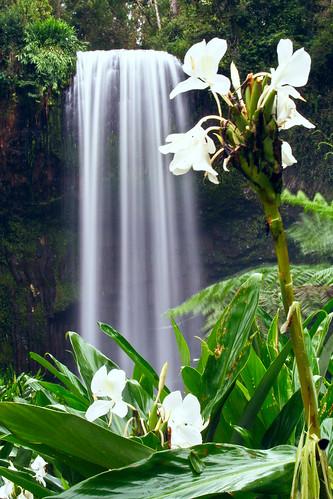 landscape waterfall australia queensland athertontablelands millaamillaafalls abigfave natureselegantshots