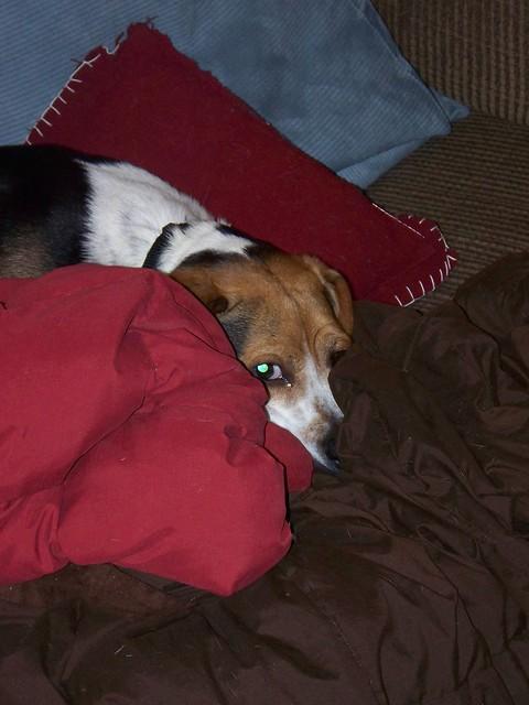 181/365 (December 9, 2008) - Hiding