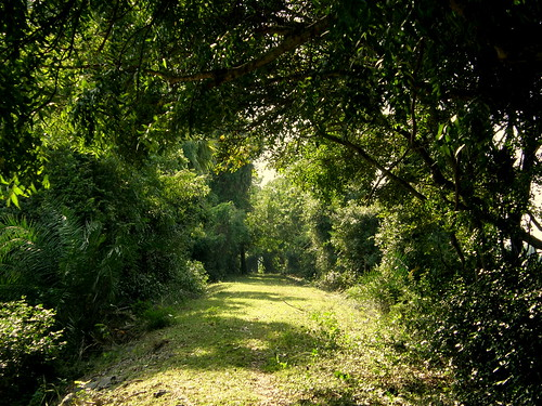 Green Way - all the way   by Balaji Photography : 6.9 Million views