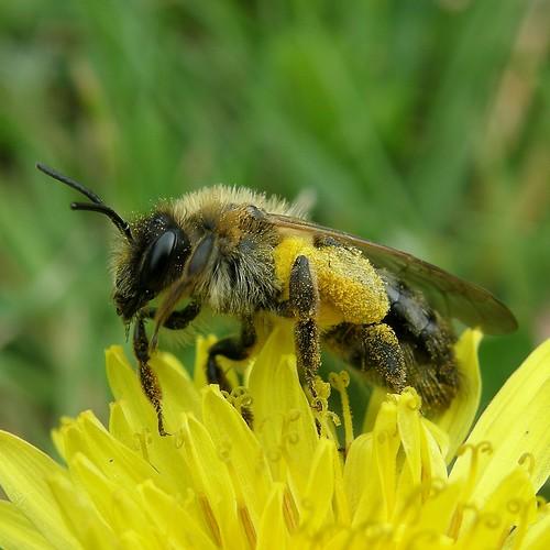 bain de pollen / bath of pollen | by OliBac