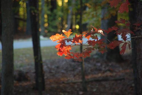 sunset tree fall leaves