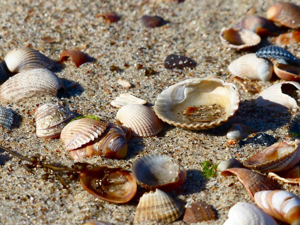 photographie de coquillages sur le sable, https://www.flickr.com/photos/125269494@N02/19530436020/in/faves-12351336@N07/