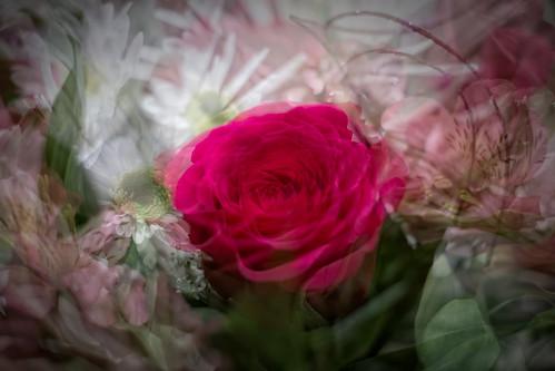 Valentine's Flowers (Wife)   by SopheNic (DavidSenaPhoto)