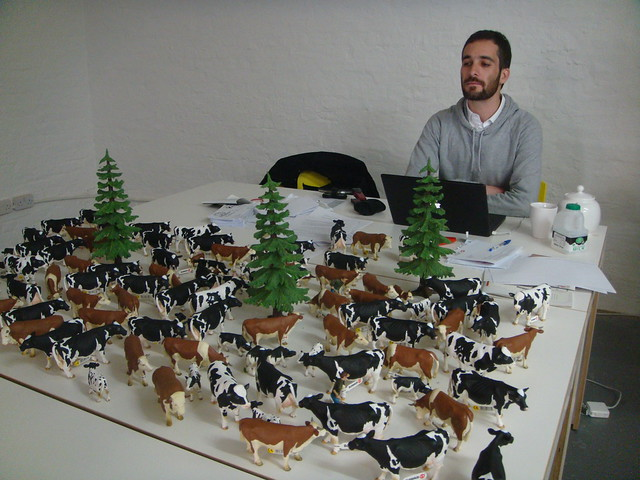 one man and his cows