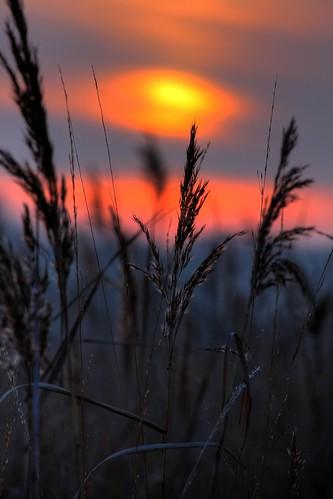 sunset silhouette wales reeds neath jerseymarine jamessamuel