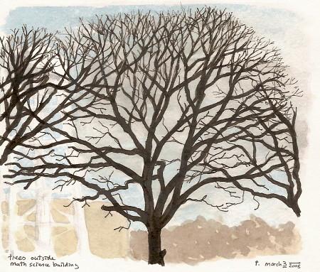you tree davis