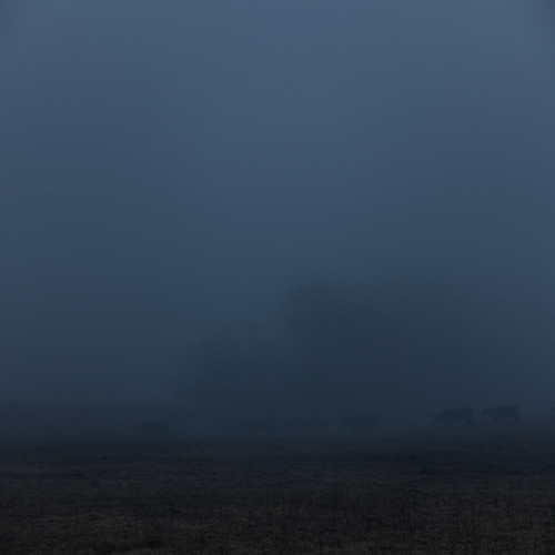 blue winter fog night rural dark landscape evening cattle cows dusk farm indiana pasture agriculture smalltown boonecounty img0721jpg