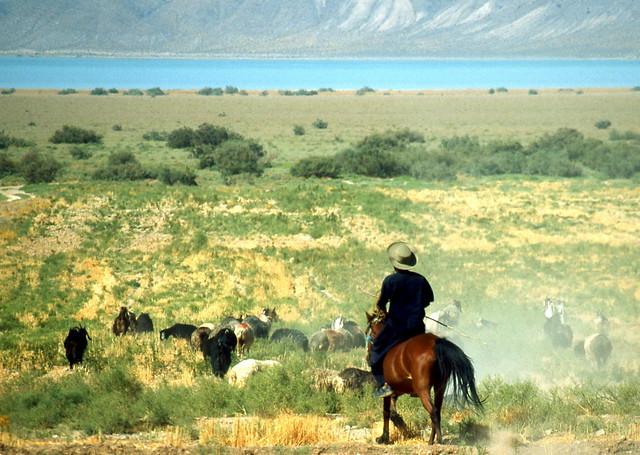COWBOY - NEYRIZ - IRAN