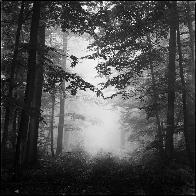 Fog #3