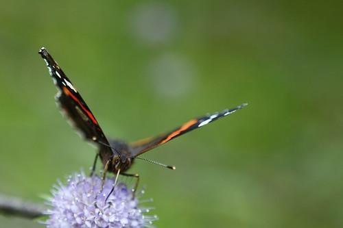 Butterfly | by ˙Cаvin 〄
